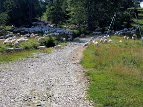 Photo: Biedne wygolone owieczki ;)