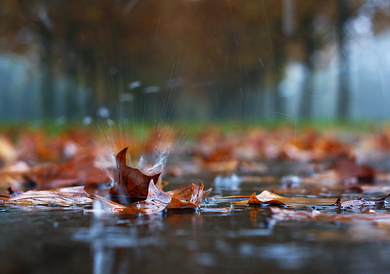Nuotando tra le foglie di Salvatore Massaiu