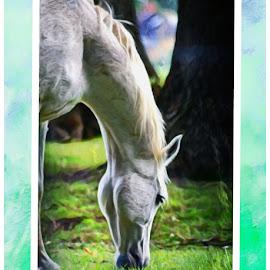 Grazing horse by Becs Becs - Animals Horses ( horse )