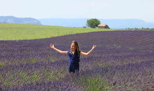 Fields of lavender on D56 between Puimoisson and Valensole, France.