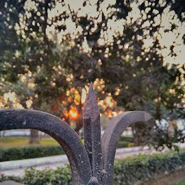 Golden Hour Click by Nand  Kishor - Nature Up Close Gardens & Produce ( lenovop2, goldenhours, shotonp2, sunset, focus, garden, wall, snapseed, sun )