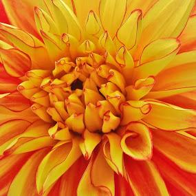 Prostě kytka by Věra Tudy - Flowers Single Flower
