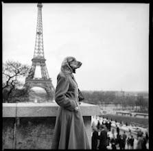 """Photo: Extrait de la série une vie de chien realise en 2013 extrait des """"archives du futur"""" une collection Tirage NB 400x400 mm"""