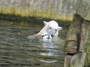 Photo: Weiter geht das Ballspiel im Wasser ;-)
