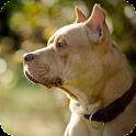 Pitbull Dog Pack 2 Wallpaper icon