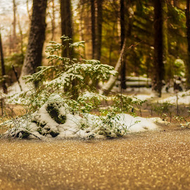 Ice in the wood by Dan Westtorp - Nature Up Close Water