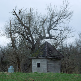 Old shed by Amanda Burton - Buildings & Architecture Decaying & Abandoned ( trees, architecture, landscape )