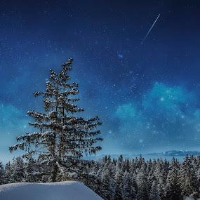 Starry Night by Kiril Krastev - Landscapes Mountains & Hills ( ski, canon, winter, sky, tree, stars, snow, forest, night, nightscape, milky way,  )