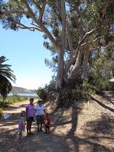 Photo: Eucalyptus Forests