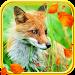 Fox Autumn live wallpaper Icon