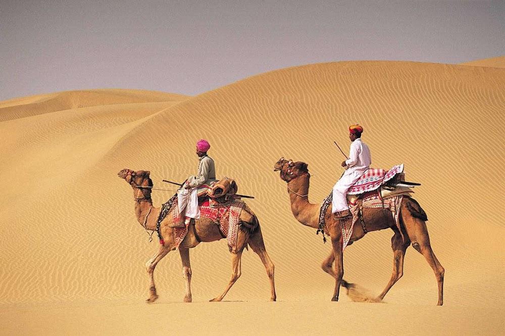 travelogged-17-things-to-do-bikaner-camel-rides_image