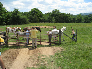 Photo: Well, it is a horse farm