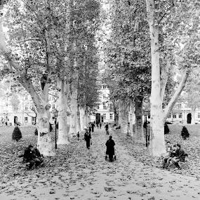 Jesen na Zrinjevcu.. by Zvonimir Cuvalo - People Fine Art
