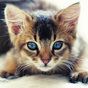 Guess The Kitten Breed Trivia icon