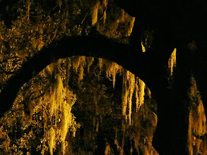 Photo: Spanish moss, Emmet Park