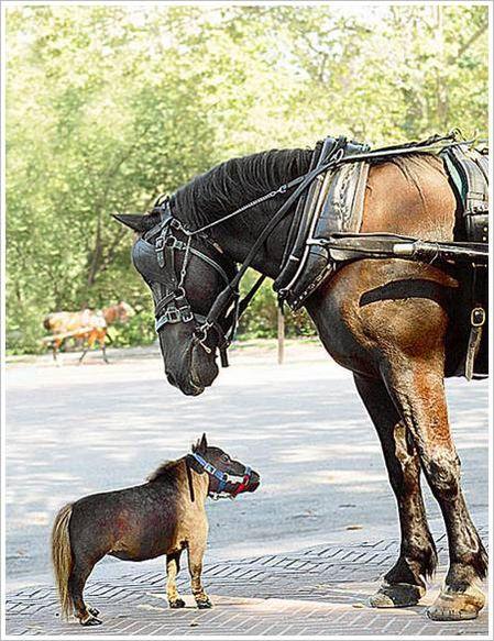Thumbelina horse