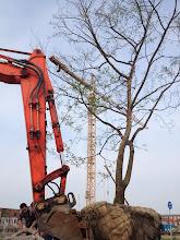 Photo: Het plaatsen van de boom bij de informatietuin