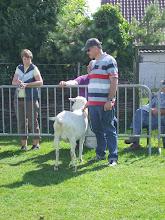 Photo: Klasse 10: overlopers twee jarige witte geit. 1a. Marijke 189.