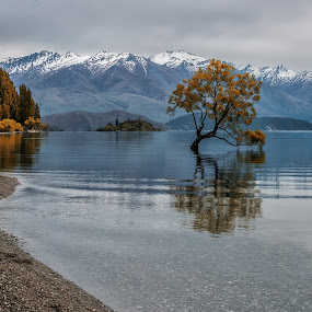 The Wanaka tree by Cora Lea - City,  Street & Park  Historic Districts (  )