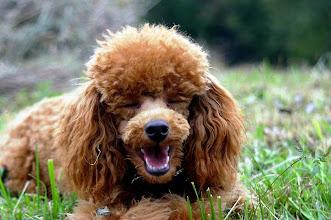 Photo: ..ja, ich kann, wie man sieht, auch lachen!