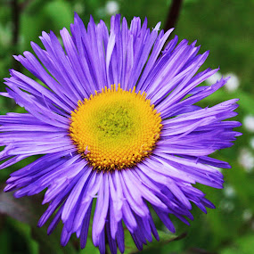 by Scott Hislop - Nature Up Close Flowers - 2011-2013 ( scotland, summer, flowers )