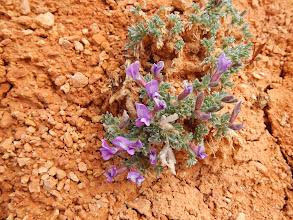 Photo: Purple flowers brighten the trail.