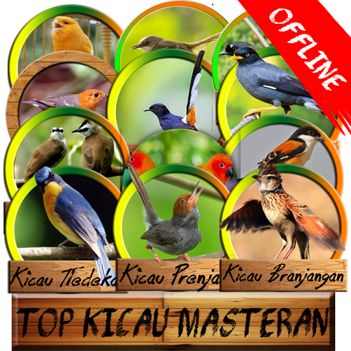 Top Master Kicau (offline)
