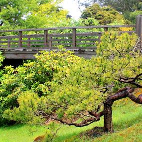 Wooden Bridge by Amory Godwin Grijaldo - Buildings & Architecture Bridges & Suspended Structures
