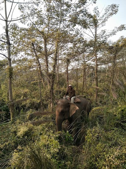 象使いさんと象