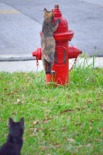 Photo: Huh? for #firehydrantfriday +Fire Hydrant Friday curated by +Gailen Mapes and #caturday too
