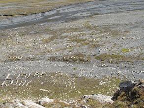 Photo: Numerosas y curiosas inscripciones hechas con piedras