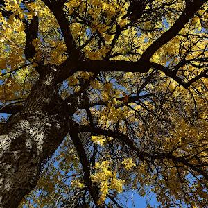 Fall changing colors Nikon D7200 121.JPG