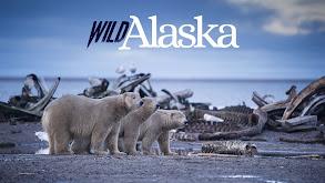 Wild Alaska thumbnail