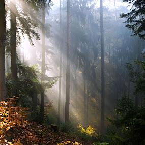 Sun rays by Jana Černošková - Landscapes Forests (  )
