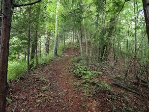 二次林の林で気持ちよく