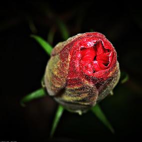 by Madihi Ata - Nature Up Close Flowers - 2011-2013