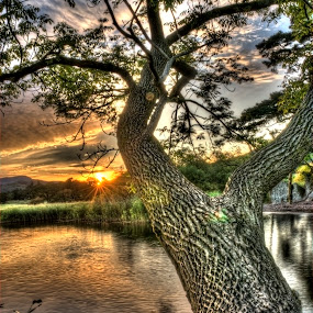 Borrans Park Tree by Alex Barrow - Nature Up Close Trees & Bushes ( sun set, hdr, tree, lake, ambleside )