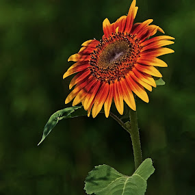 Flower of Summer by Patti Reddoch - Nature Up Close Flowers - 2011-2013