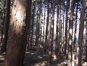 右下から林道
