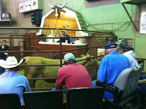 Photo: Sand Mountain Stockyards, Alabama.  Cattle auction.