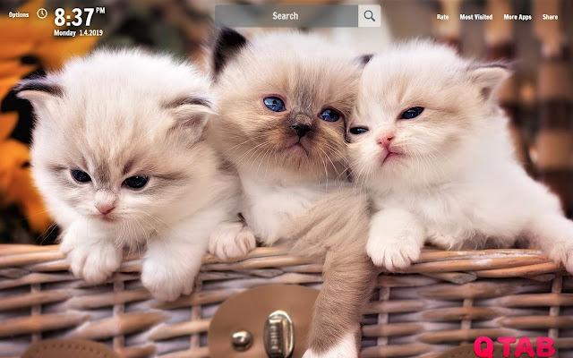 Kitten New Tab Kitten Wallpapers