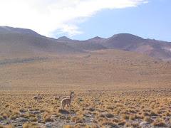 Desert de Antacama