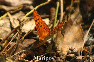 Photo: Mariposa