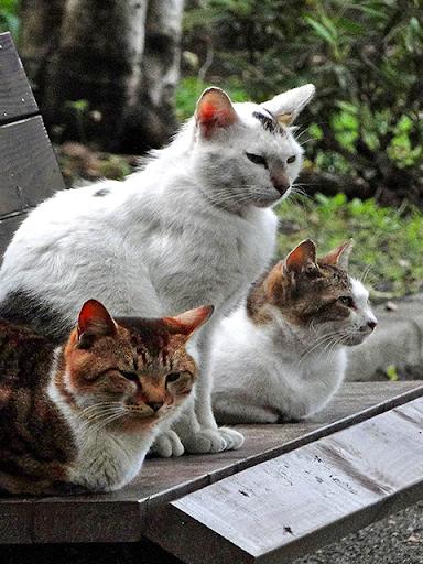 Aha-Experience Scenes of Cats 1.1 Windows u7528 5