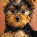 yorkie puppy wallpapers icon