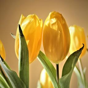 Secrets Between Tulips by Lena Arkell - Flowers Flower Arangements ( indoor, secrets, green, tulips, yellow,  )