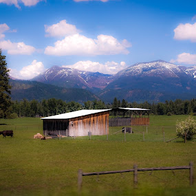 by David  Clayton - Buildings & Architecture Other Exteriors ( ranch, mountain, mountains, field, barn, montana, range, cattle, fields )