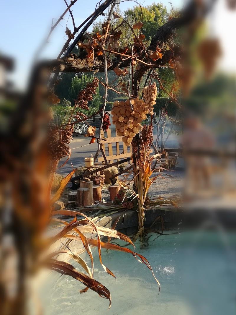 L'uva e i colori dell' autunno di alessiag2473