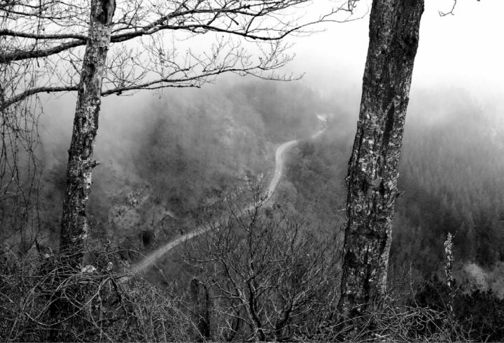 La strada nel bosco di trillo