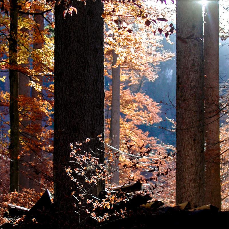 Autunno in Baviera di alberto raffaeli